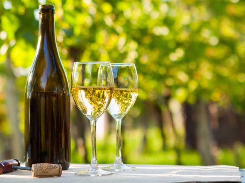 Bottle of wine and two glasses in a vineyard