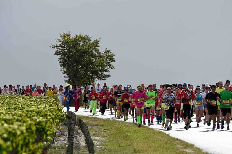 Marathon runners in fancy dress take part in a gourmet run in Medoc, Bordeaux