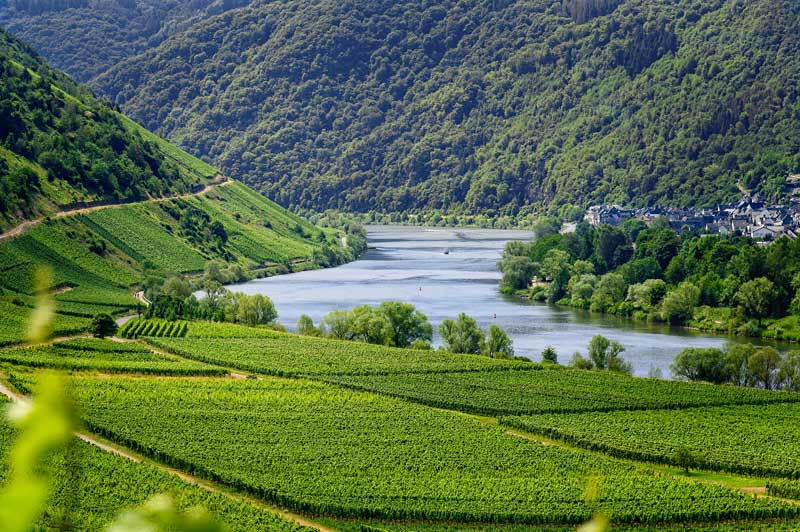 Lush fertile vineyards in Rhone Valley