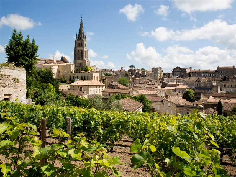 Vineyards with leafy vines surrounding the small hilltop town of Saint Emilion in Bordeaux