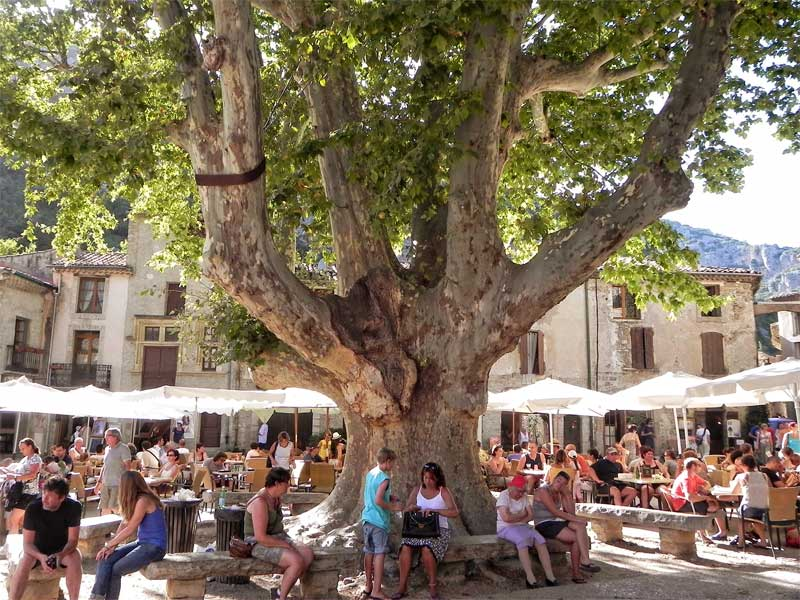 People sit under an ancient tree in a town square in St Guilhelm Le Desert, southern France