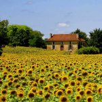 5 reasons Gascony should be on your France must-see list