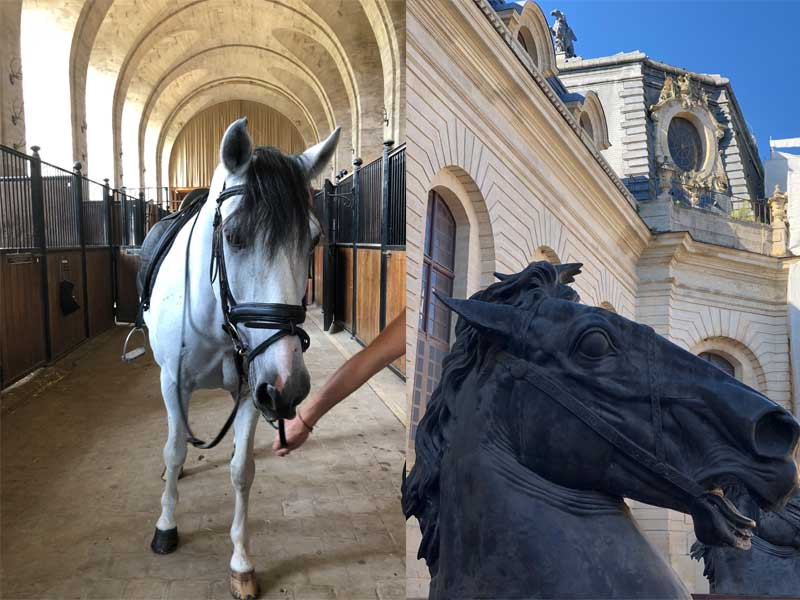 Horse and stables that look like a castle at the Chateau of Chantilly