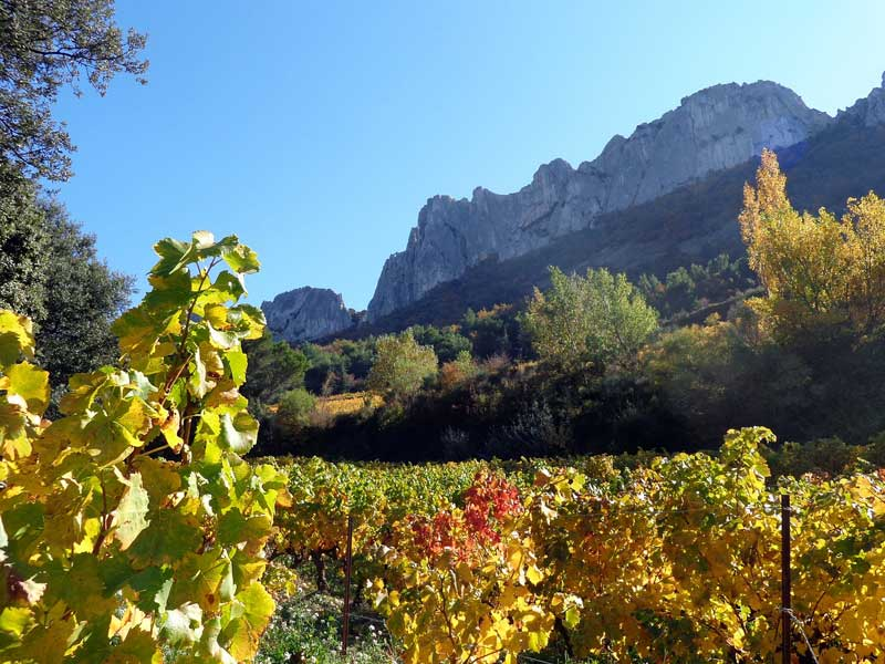Provence mountains under a blue sky with vines ripening in the sun in Provence