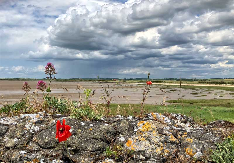 View over the Gironde Estuary from Talmont-sur-Gironde, flat sands, wild flowers and flowing water