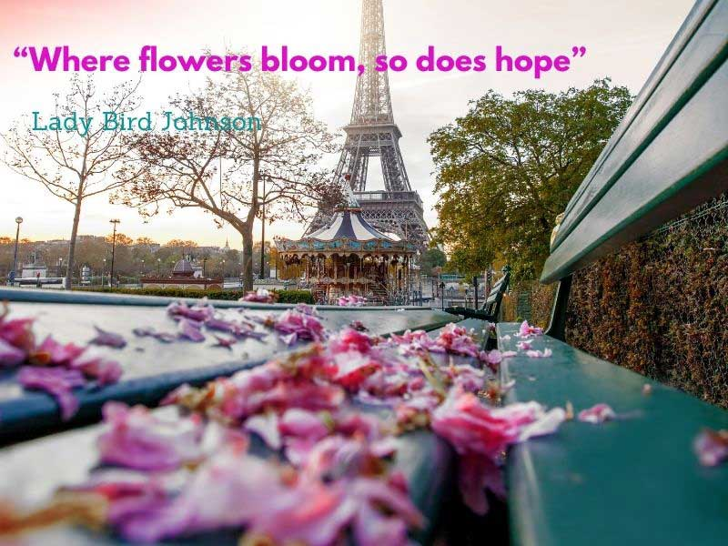 Eiffel Tower Paris in the spring, cherry blossom fallen onto a bench