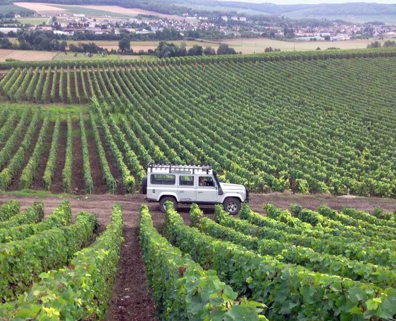 Champagne vineyards in gently hilly countryside, Picardy, northern France