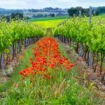 One day wine tour in the Gers, Gascony