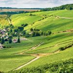 The Champagne vineyards of Picardy