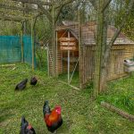 A Coop d'Etat | Life with chickens