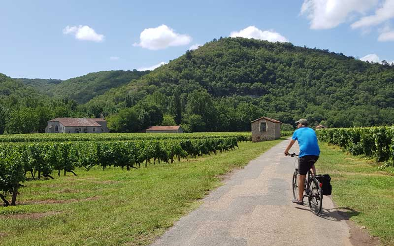 Man rides bike through vineyards in Tarn-et-Garonne