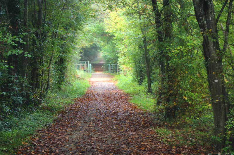 Woodland walk in the Loir Valley through a tunnel of tall trees