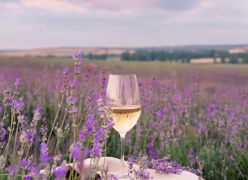 Glass of rose wine on a table in a field of blooming lavender in Provence