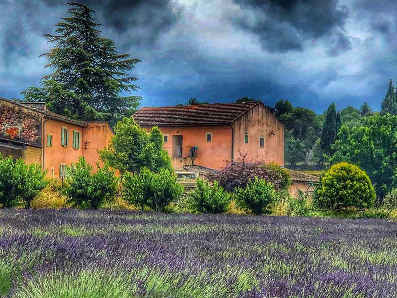 Thundery sky over a field of blooming lavender in Bonnieux, Provence