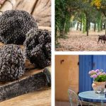 The ultimate gourmet truffle and wine tour Provence