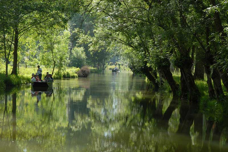 Boat rides on green water, trees overhanging from both sides of the river