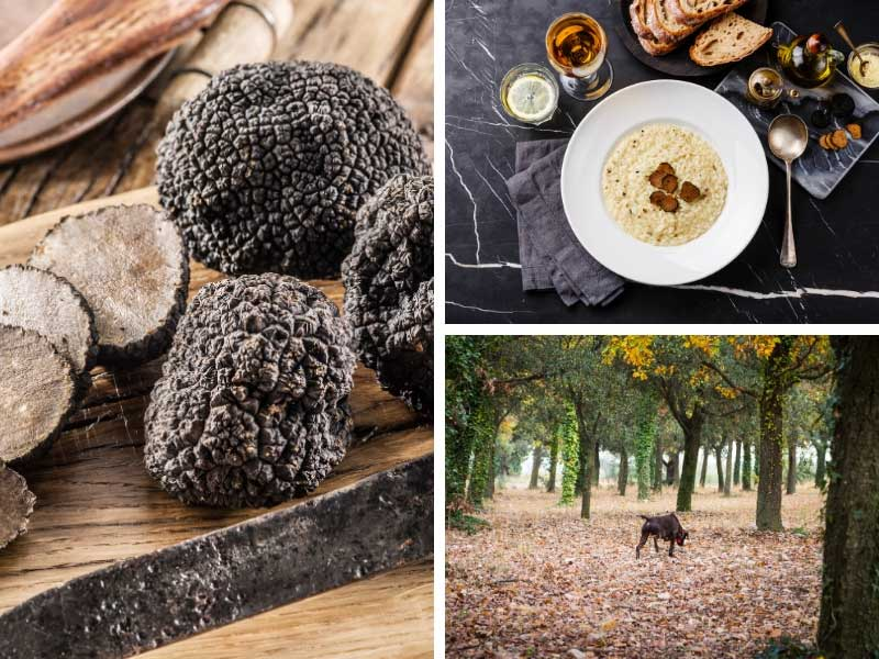 Fresh truffles on a plate, just hunted out by a truffle sniffing dog in Provence