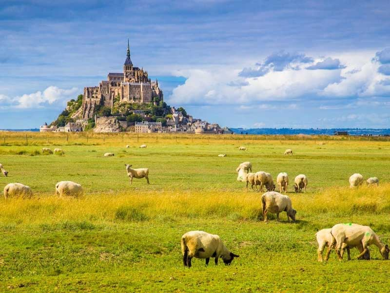 View over Mont Saint Michel in Normandy, sheep on the grassy plains in front of it