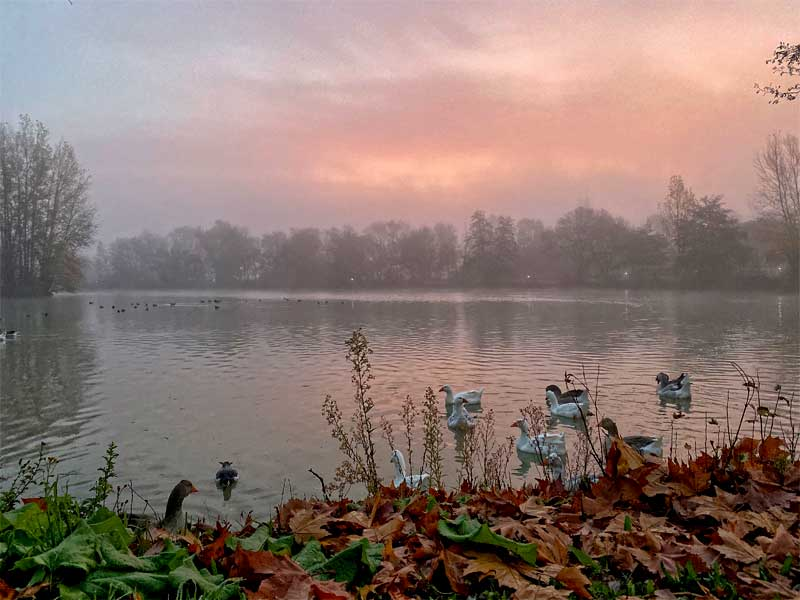 Sunrise over a lake filled with ducks and wild birds at L'Isle Jordain, Gers