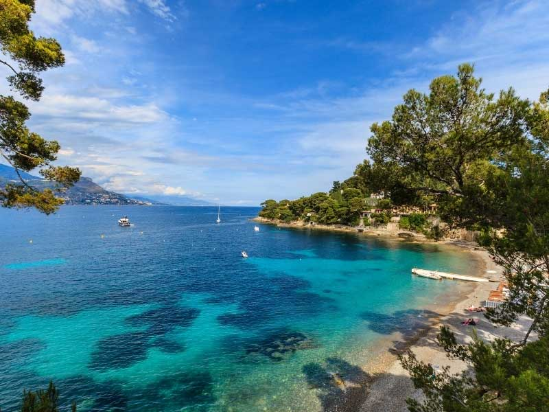 Cap Ferrat bay, turquoise, tranquil sea, pine trees growing down to the sandy beach
