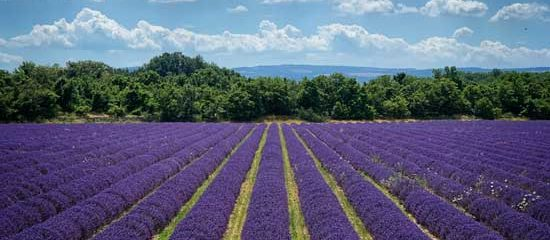 Provence lavender photography tour
