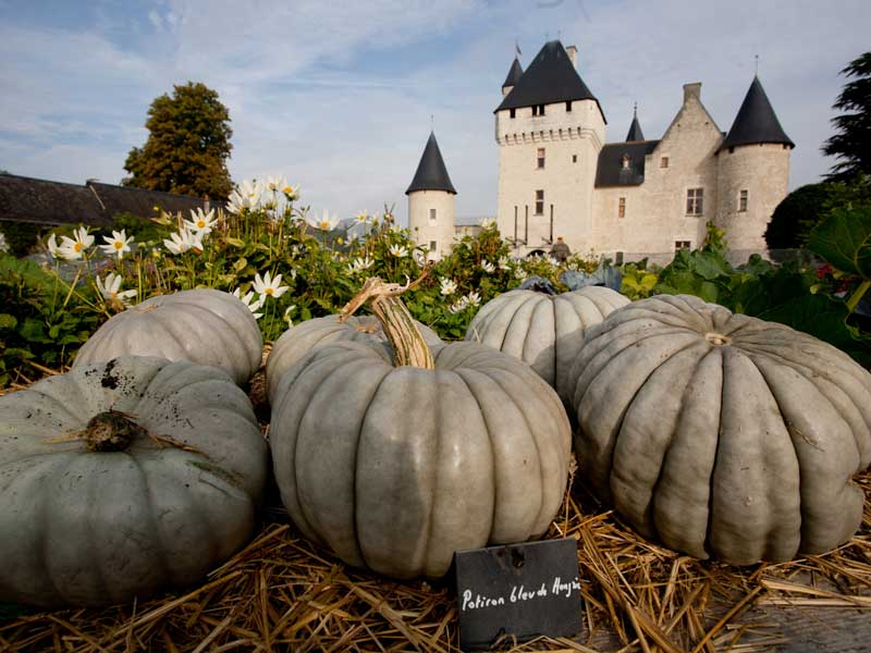Green pumpkins in front of a beautiful white chateau with black tiled towers, Loire Valley