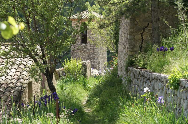 Wild garden full of purple and white irises, enclosed by a stone wall in Brantes, Provence