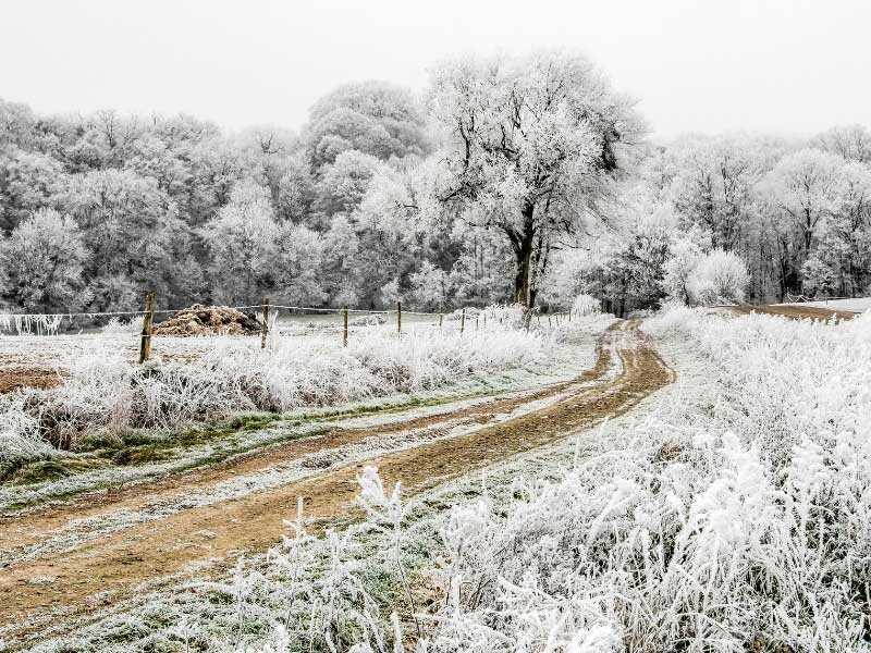 Trees and grass covered with crystallised frost creating white art in the countryside of Auvergne, France